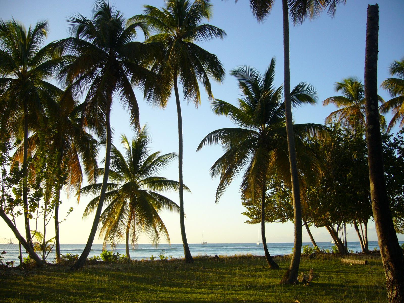 Woche 4: Wanted – der Palme ihr Öl