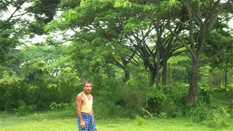 Forest Man of India – der Mann, der sein Leben damit verbrachte, einen Wald zu pflanzen
